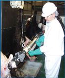液压牛蹄剪 查维斯美国进口牛屠宰流水线设备*