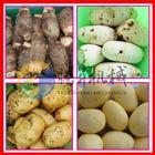 红薯地瓜土豆清洗机 毛辊去皮机