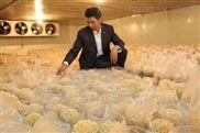 上海金针菇低温冷库设计,建造