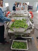 迪凯供应净菜加工流水线果蔬清洗设备