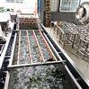 净菜清洗机流水线