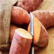 济南红薯地瓜干热泵烘干设备厂家