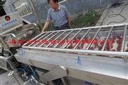 利特厂家供应大枣毛刷清洗机果蔬清洗设备