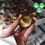 延安香菇空气能热泵烘干设备