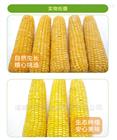 买玉米专用清洗机