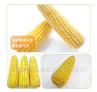YT—800速冻彩色玉米加工设备