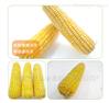 彩色玉米速冻加工设备