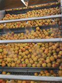 西红柿清洗机