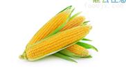 玉米烘干机1