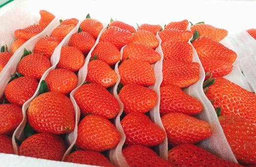 如何有效延长草莓保鲜期才是关键课题