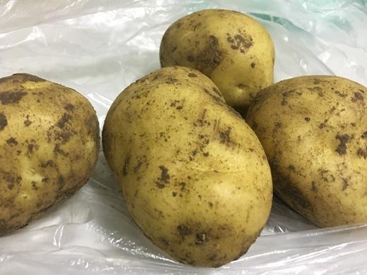马铃薯新品种通过鉴评 将成薯片加工企业首选品种