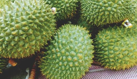 泰国榴莲1分钟卖出8万个 这些设备还需加快研发