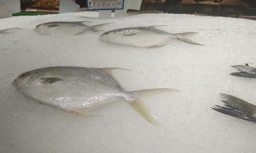 生态养殖—渔业现代化转型的关键