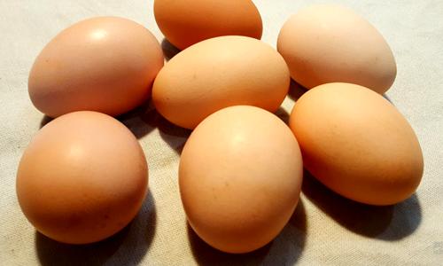 如何提高产蛋率和降低破损率 不妨用产蛋箱试试看