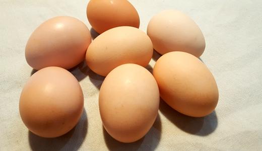 企业鲜鸡蛋首次直供香港 这些相关设备少不了